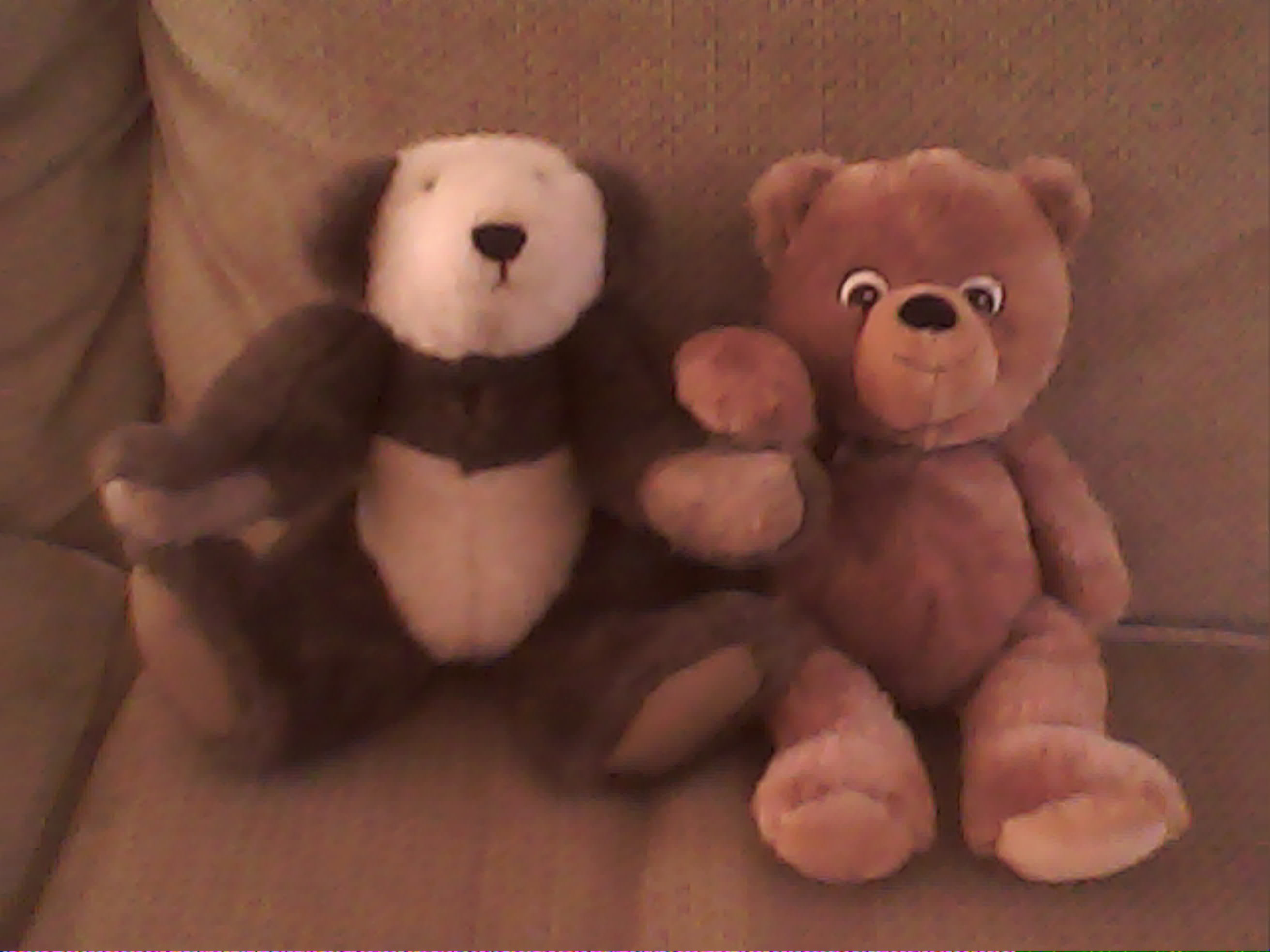 Mr.Jiggles new friend, Mr.Beary